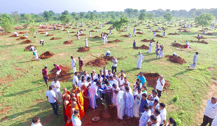 10,000 Medicinal herbs planted to mark Soma Thera remembrance
