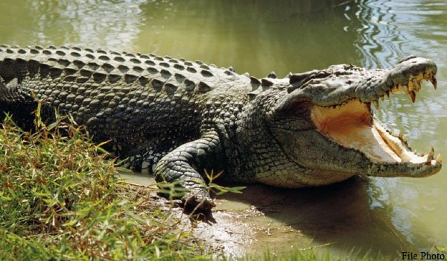 Human-crocodile conflicts too, becoming commonplace