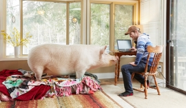 Experience: I accidentally bought a giant pig