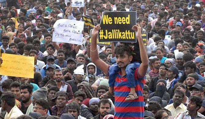 Pro Jallikattu protests continue