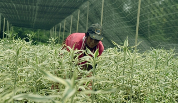 Netherlands assists SL to improve horticultural industry