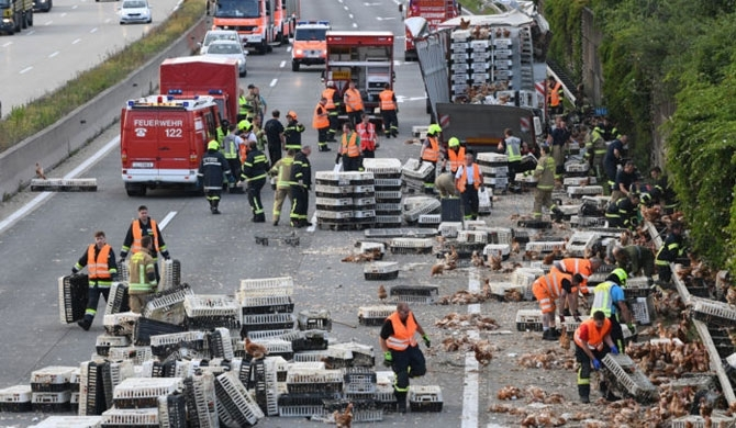 Chicken truck crashes on motorway in Austria
