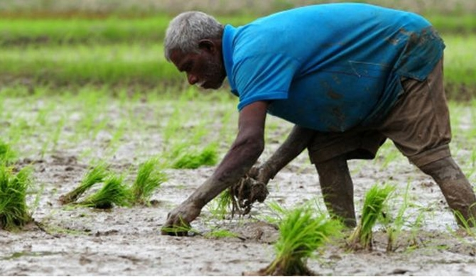 Crops damaged by drought ; Organic farmers unaffected!