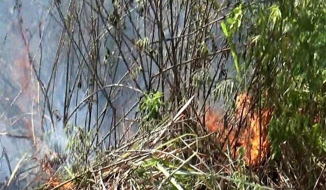 Carelessness sets 3-acres in Norwood ablaze (pics)
