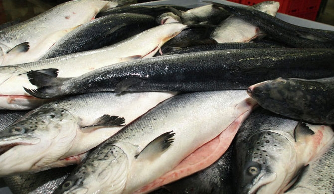 106,000 MT of fish imported in 2017