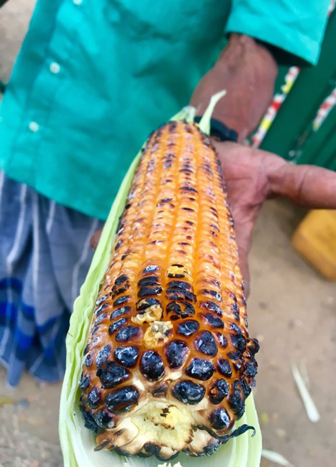 Ash roasted corn anyone? (Pics)