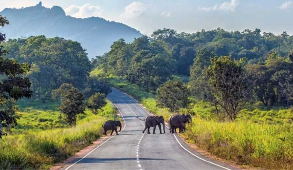 Maduru Oya Natl. Park faces destruction