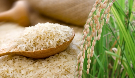 Cabinet approves maximum retail price for rice