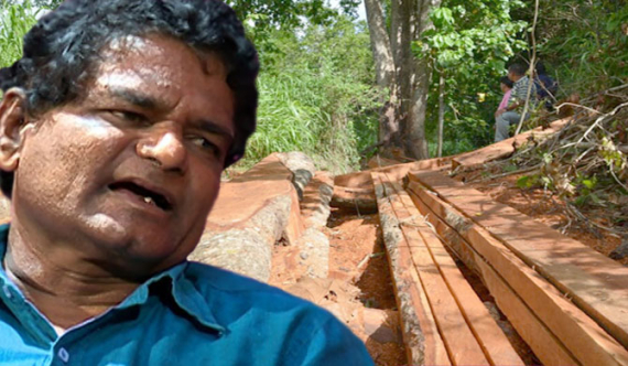 Wildlife State minister releases illegal tree feller ; threatens officials