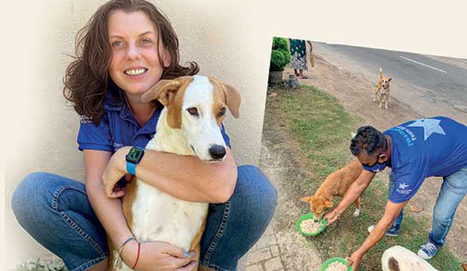 UK resident rooting for Sri Lankan street dogs