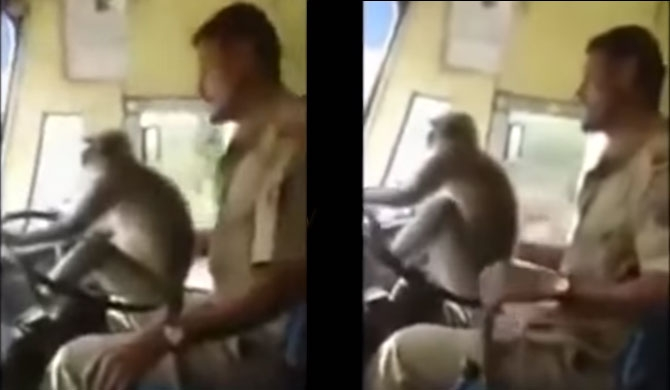 Driver who let monkey drive bus, suspended (Video)