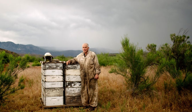 Dennis Arp stands for a portrait near a colony of honeybees outside Rye, Arizona. Photograph: Caitlin O'Hara/The Guardian