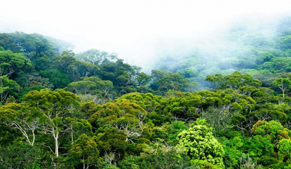 69 forests to be named as forest reserves