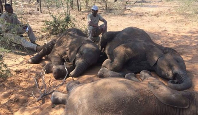 Around 90 jumbos killed in Botswana
