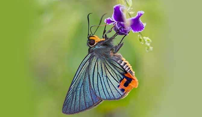 New Field guide to the butterflies of Sri Lanka