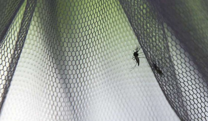 'Targeting mosquitoes' strategy comes into question