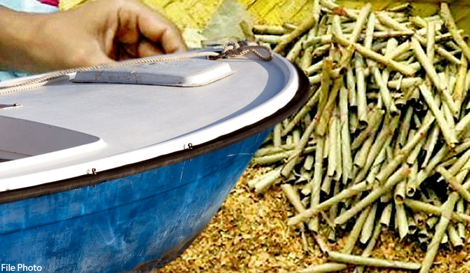 Beedi leaves being smuggled into the country by dingy!