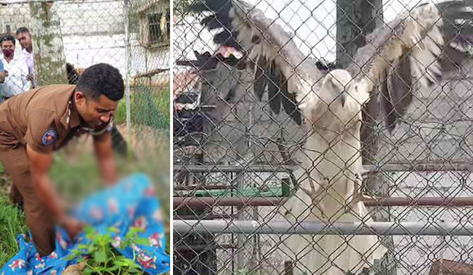 Eagle suspected to have been used by 'Angoda Lokka' seized