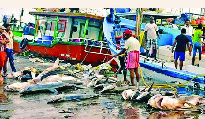 Fish stocks stuck at habours ; minister unresponsive