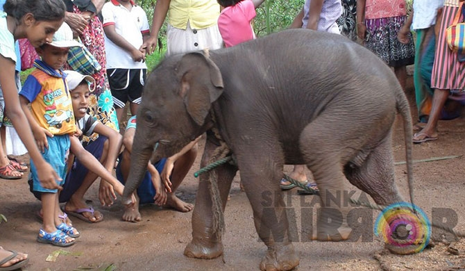 Baby elephant falls into well and escapes (Pics)