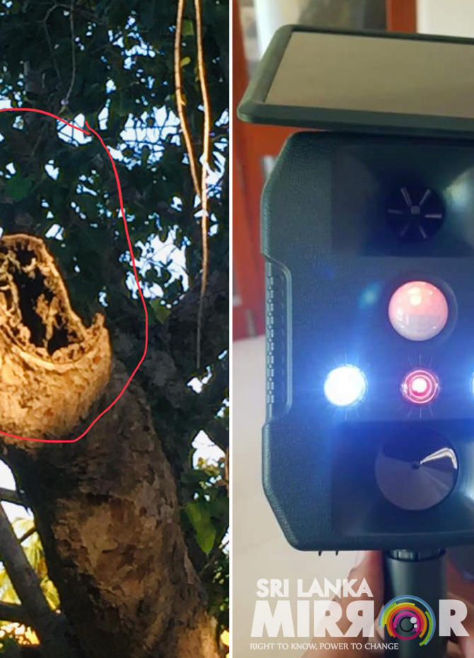 High-tech move to save Sri Maha Bodhi from parrots (Pics)