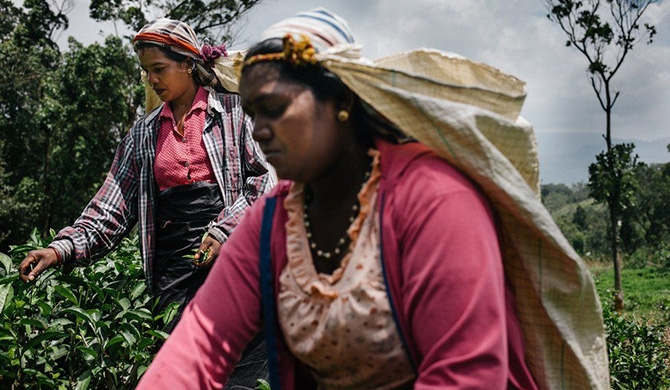 The 150-year-old story of Sri Lankan tea-making