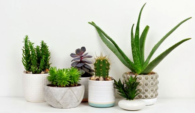 Are your houseplants bad for the environment?