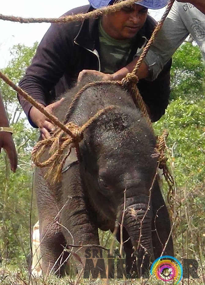 Elephant calf rescued from waterhole (Pics)