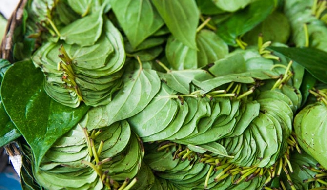 Betel prices decline drastically
