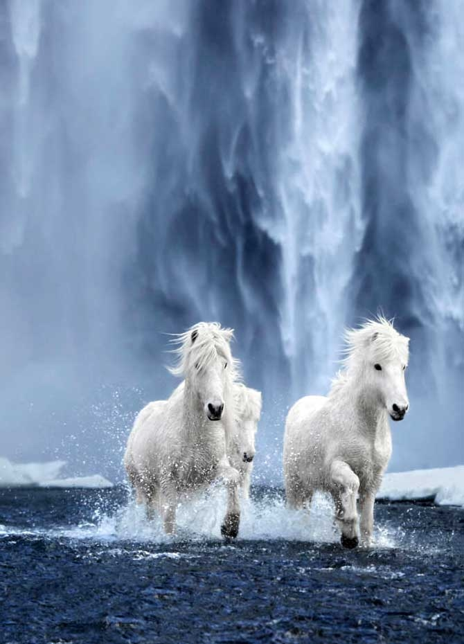 Fairytale horses 'In the Realm of Legends' (Pics)